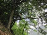 <b>Potatura alberi</b>